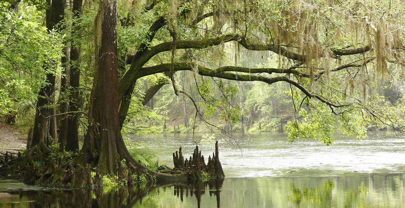 1400-everglades-national-park-tree.imgcache.rev1409336294425.web_