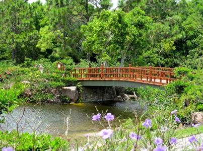 Morikami | Wellington Garden Club